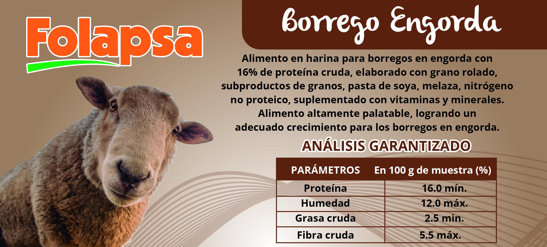 BORREGO ENGORDA-01 (1)