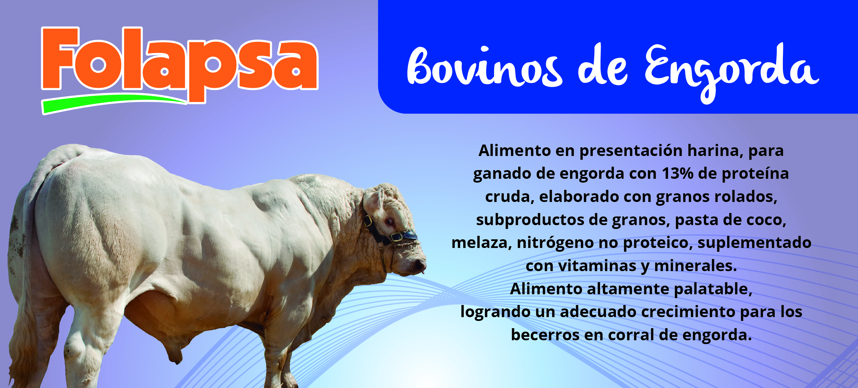 BOVINOS ENGORDA-01 (1)