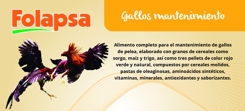 GALLOS MANTENIMIENTO-01