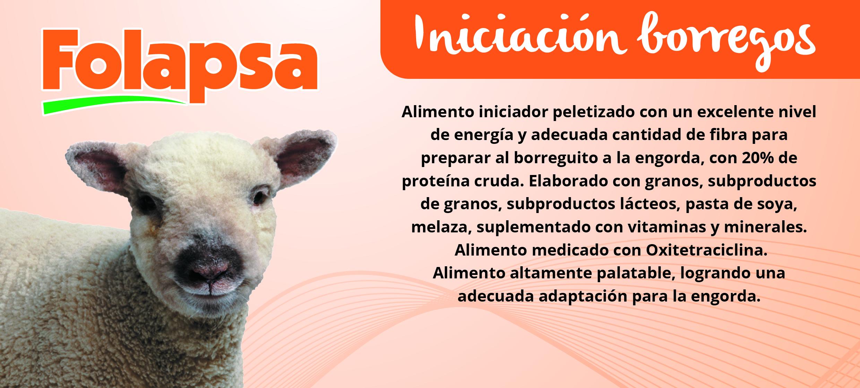 INICIACION BORREGOS-01